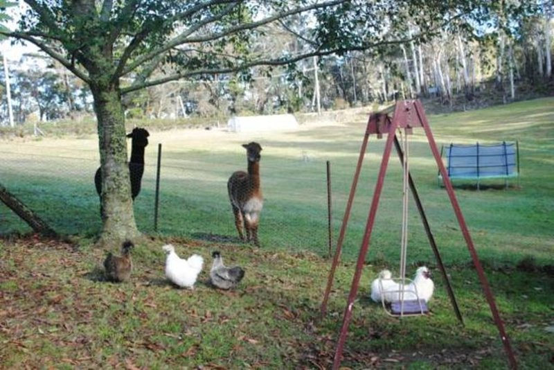 Tricklebeck Country Home on 6 acres with alpacas, chickens and picturesque dam, location de vacances à Mount Victoria