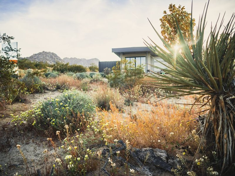 Caelum Joshua Tree - Urban Design in Rustic Desert, vacation rental in Joshua Tree