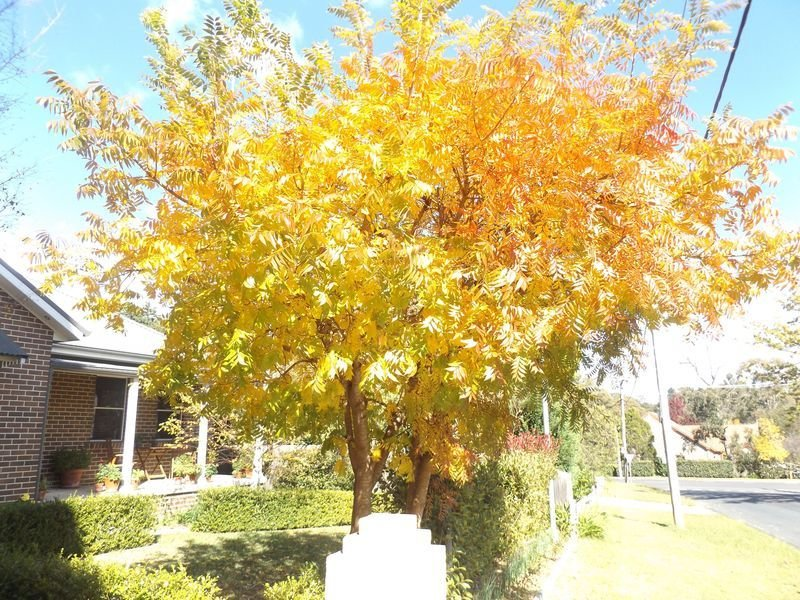 Old Bowral Charm - Aitken Adventure, vacation rental in Mittagong