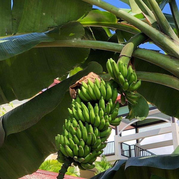 Tropical hideaway. Best Place on Eden  Island - seychelles, alquiler vacacional en La Misere