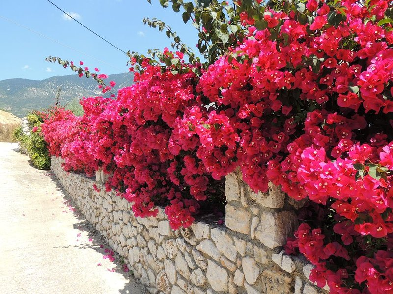 Red Bougainvillea May/June