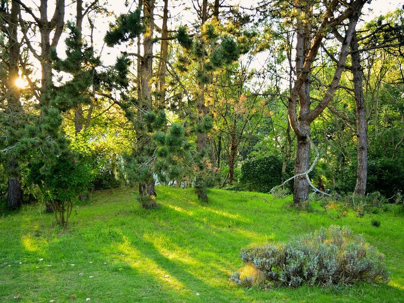 Large garden of 2000 m² shaded by pines.