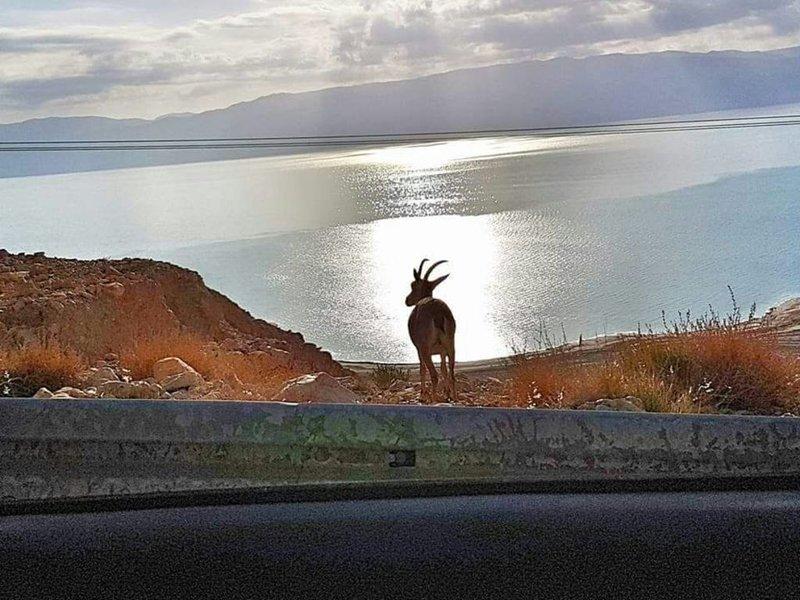 Patricia & Eilam house - happy hosting, alquiler de vacaciones en Dead Sea Region