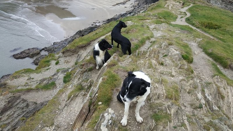 Happy dogs taking in the view!