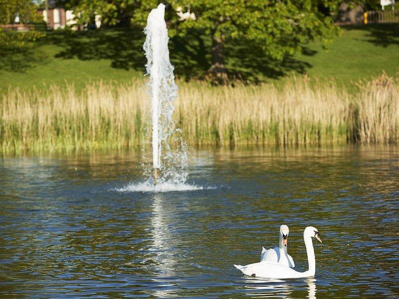 Promenadenpark mit wunderschönem See und Schwänen