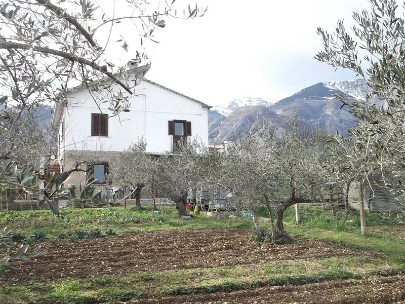 Sit back and watch the olives grow!, holiday rental in Casoli