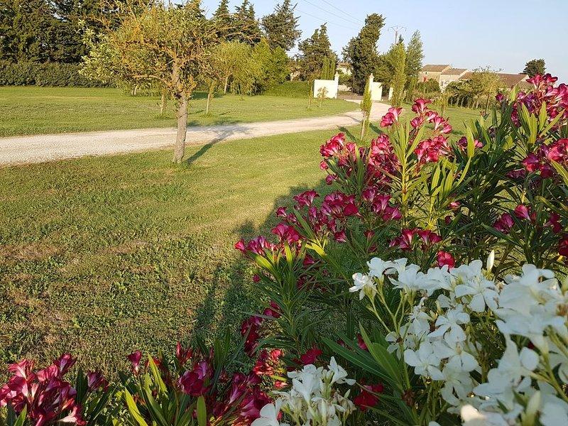 Mas familial avec piscine au cœur de la Provence à 15 minutes d'Avignon, casa vacanza a Entraigues-sur-la-Sorgue
