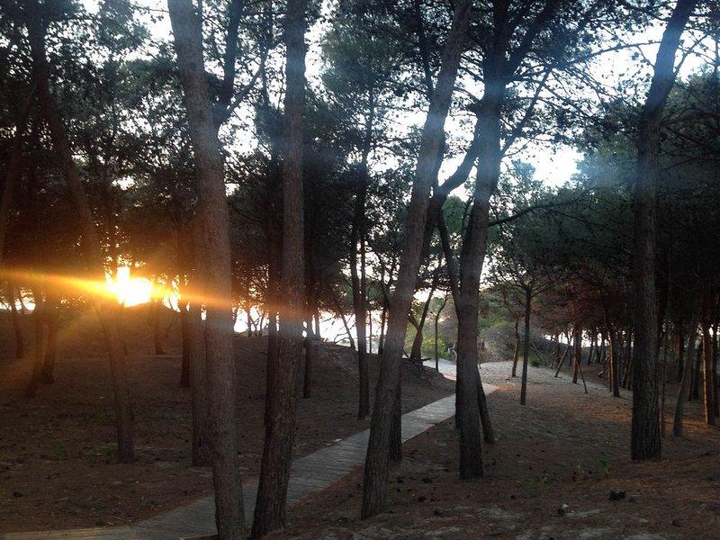 appartamento a pochi passi dal mare in residence le dune rivabella, vacation rental in Rivabella