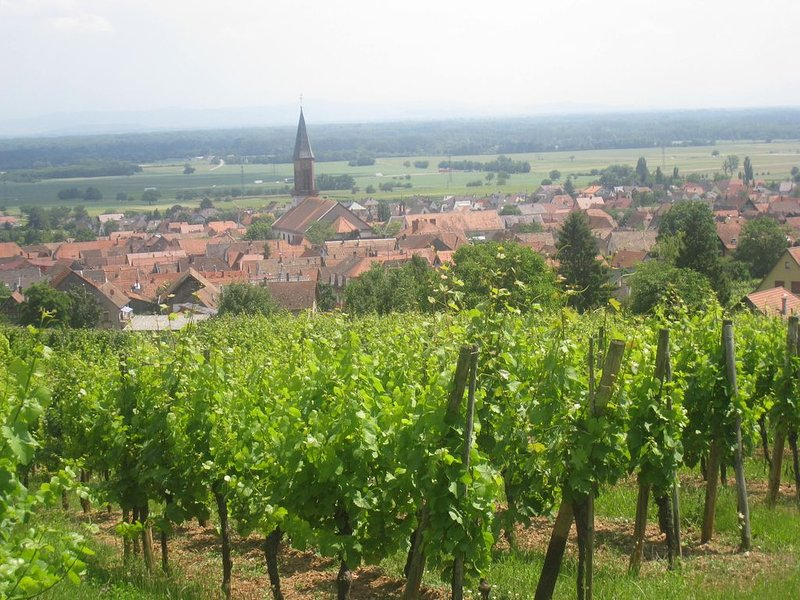 Gite sur la route des vins au calme avec belle vue sur chateau de Kintzheim, holiday rental in Chatenois