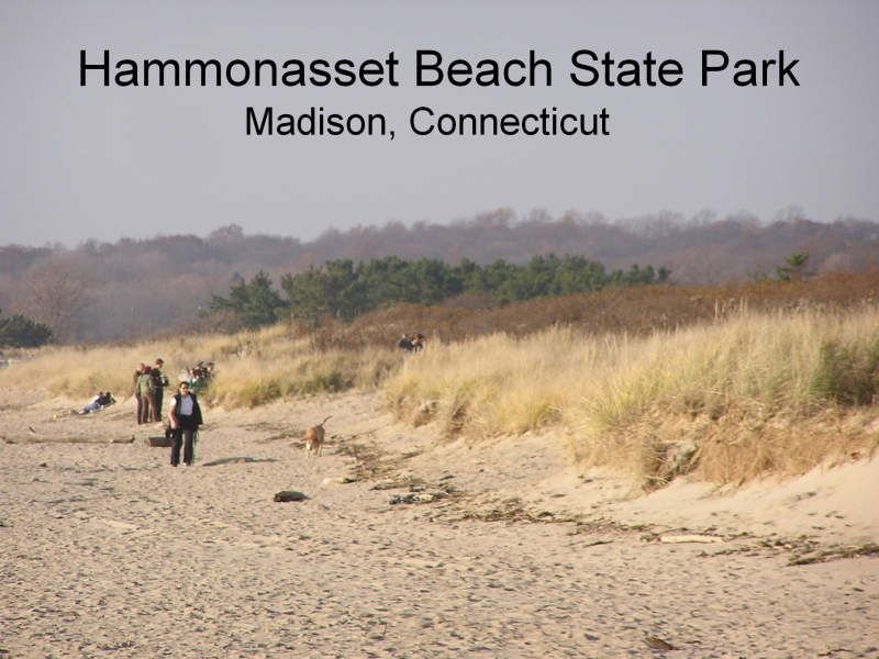 Hammonasset Beach State Park is located 1 mile away