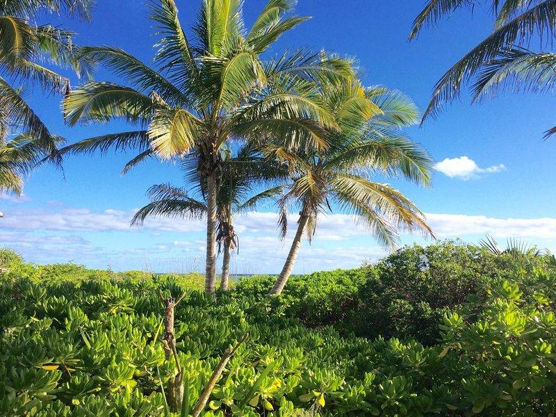 Nice palm tree