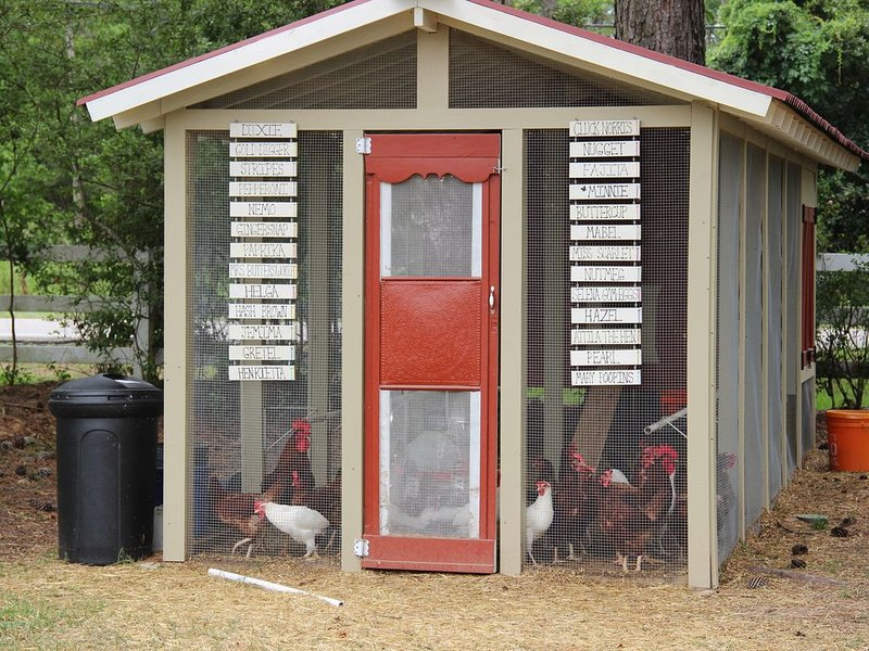 Our chicken coop!  Our rooster, Cluck Norris keeps an eye on his hens!