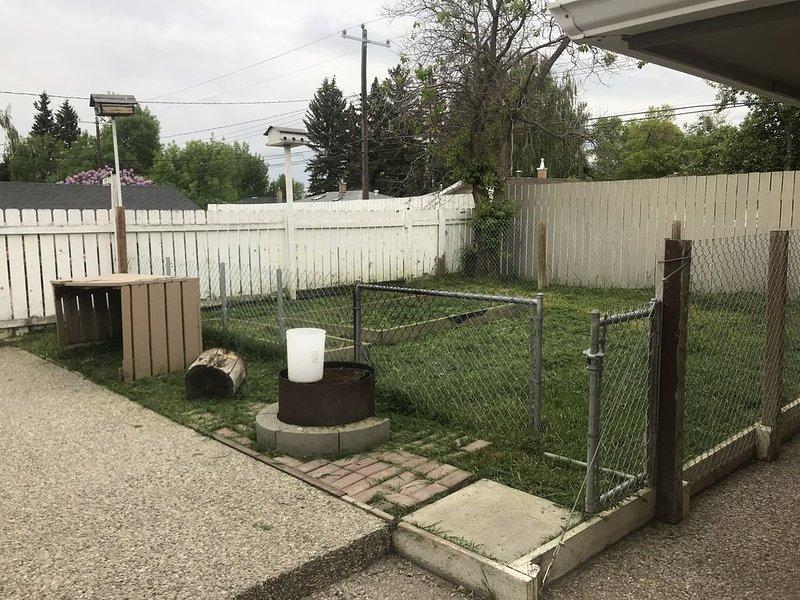 Course de chien dans la cour arrière