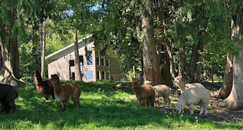 A unique, spacious cottage located on the edge of our 100-acre alpaca farm., location de vacances à Lakewood  Snohomish County