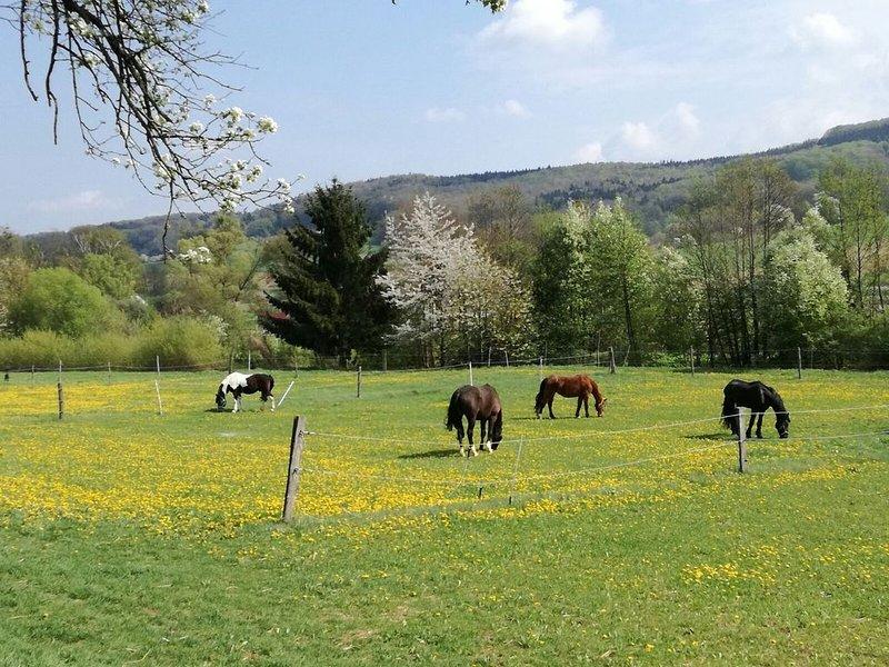 Urlaub unter glücklichen Tieren !, holiday rental in Sankt Aegyd am Neuwalde