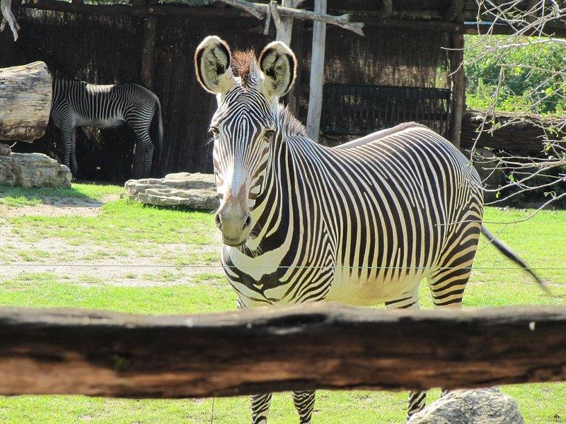 Zoo Leipzig Image by Paninero on Pixabay