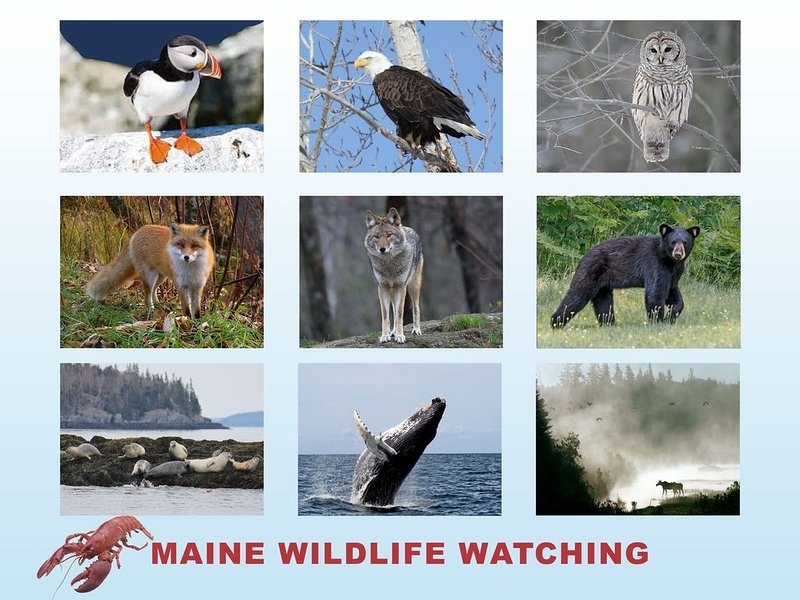 Puffin tours and Moose Safaris should be booked in advance. Wildlife is copious!