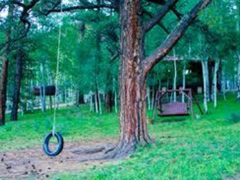 Children love the tree swing!  Parents enjoy their own swing too!