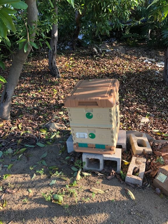 Beehives from Avocado Grove
