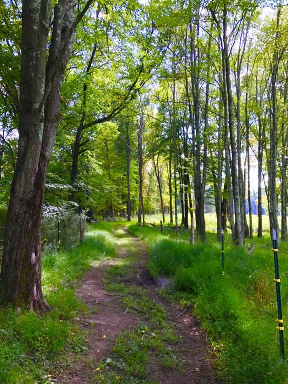 Meander through the woods