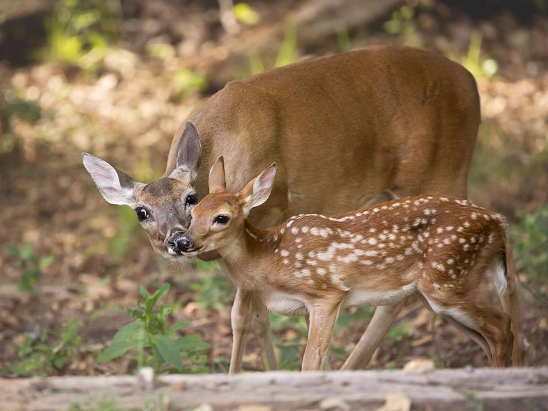You will see deer every morning and evening around the Ranch.