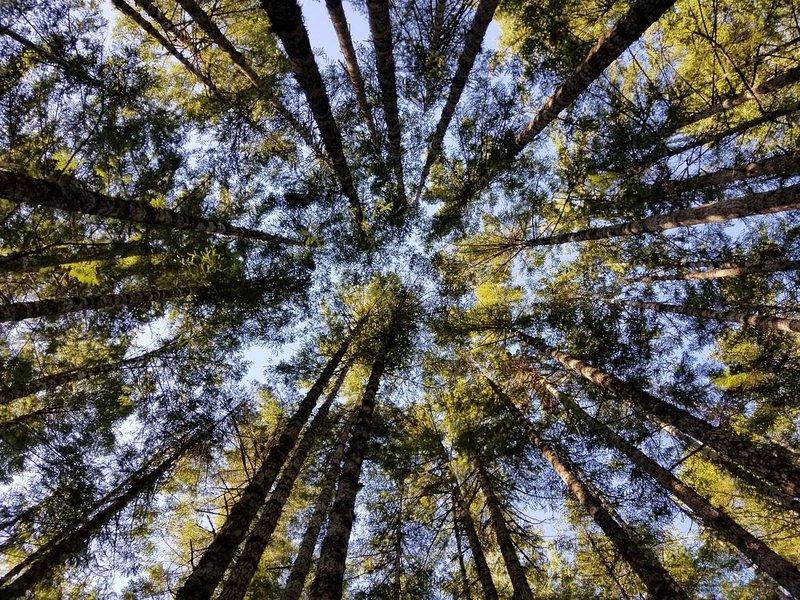 27 Forested Acres w Mountain Views near Olympic Natl Park, aluguéis de temporada em Joyce