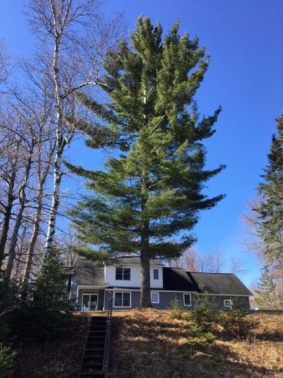 """Nuestro """"Big Pine"""" en Big Pine Lake!"""