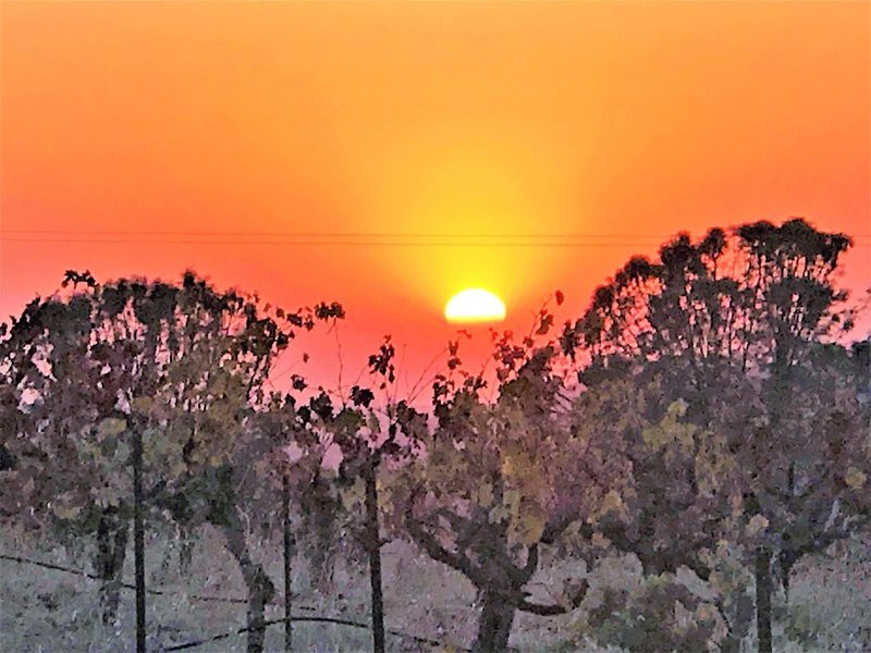 Stay on a Small Vineyard in Beautiful Amador Wine County, holiday rental in Plymouth