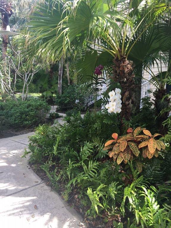 Front Yard Foliage.