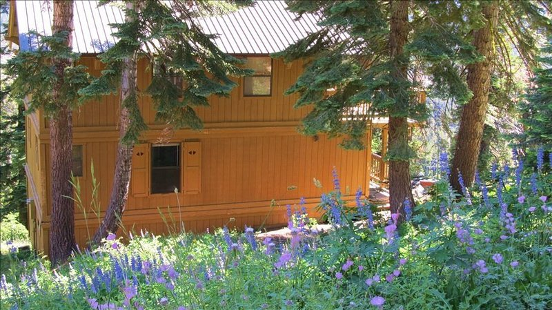 Comfort, Privacy, and Panoramic Views at 7000 Feet!, holiday rental in Bear Valley