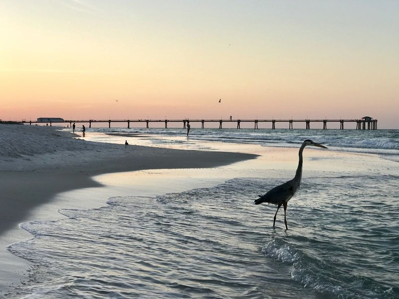 ⛱Beach Front⛱ �♀️Pool�♂️�Beach Chairs Kayak Paddle Board included�, holiday rental in Fort Walton Beach