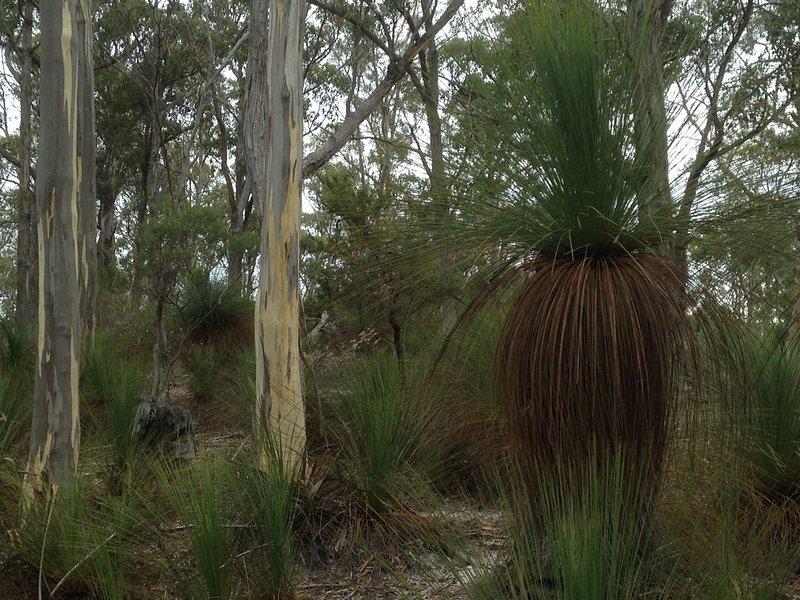 Natural coastal bushland