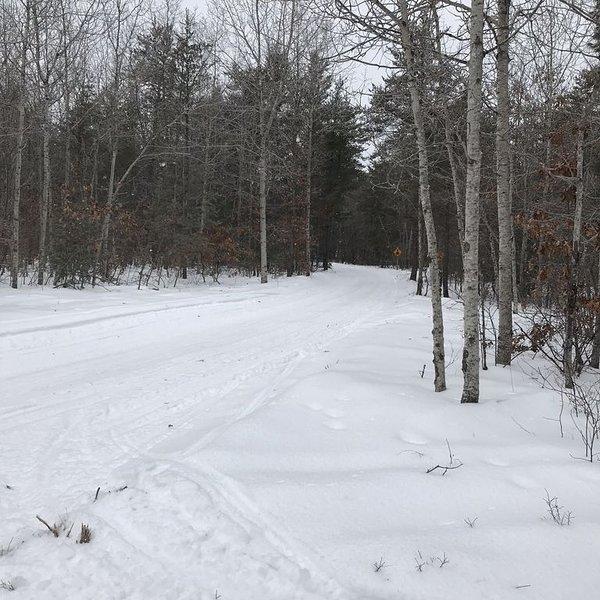 Ongeveer 1/2 mijl terug van ons huis door het bos op onze eigen paden.