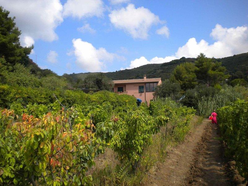 ELBA Località LACONA, vacation rental in Lacona