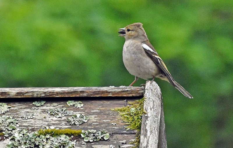 Birds that visit the cottage