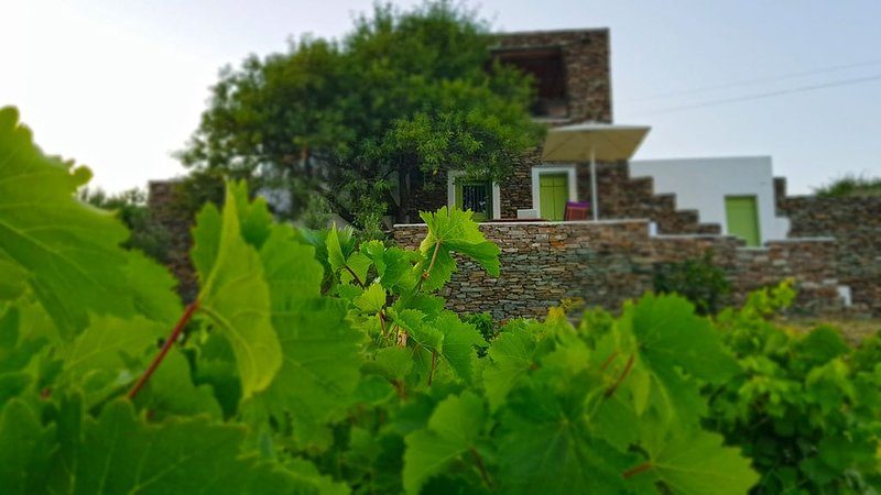 Cycladic vineyard house, holiday rental in Chrisopigi