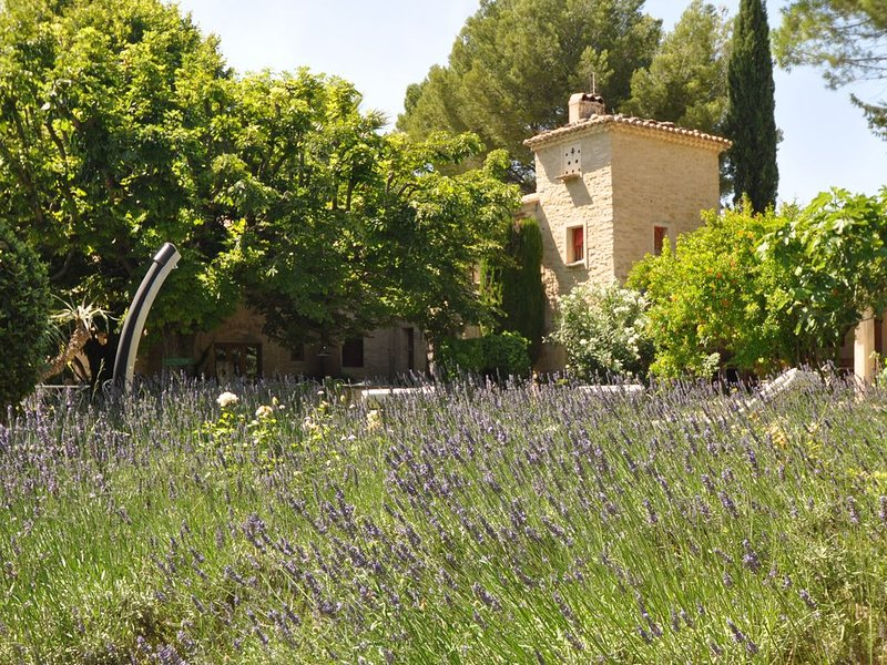 Merveilleux Mas provençal du 17ème siècle au coeur de 4ha de vignes et oliviers, vacation rental in Caromb
