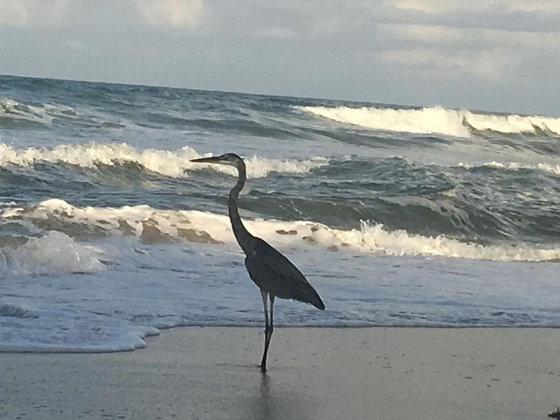 Wildlife, Waves, and Wonder on Melbourne Beach - Direct Oceanfront, vakantiewoning in Micco