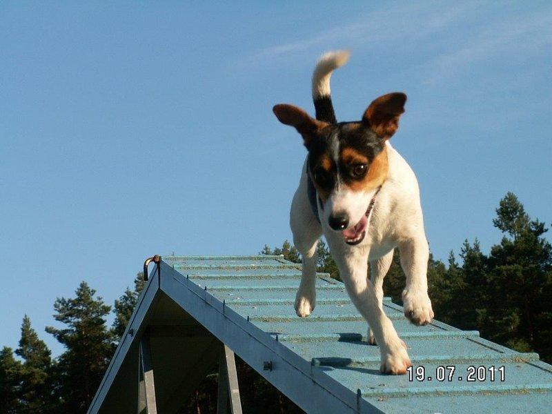 Forsthaus Metzelthin - Urlaub mit Hund, Ferienwohnung in Himmelpfort