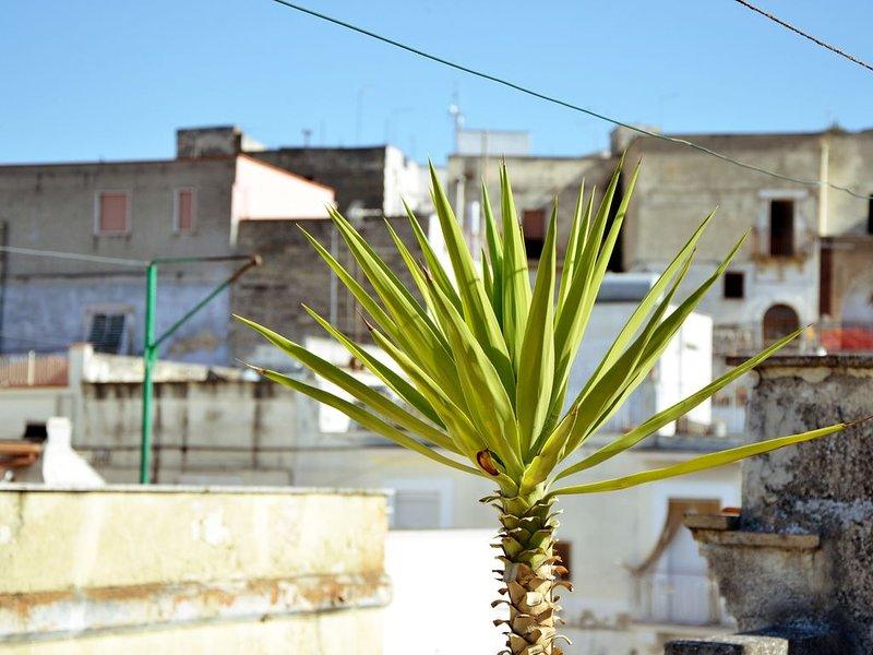 Ferienhaus für 5 Gäste mit 100m² in Canosa di Puglia (77378), holiday rental in Canosa di Puglia