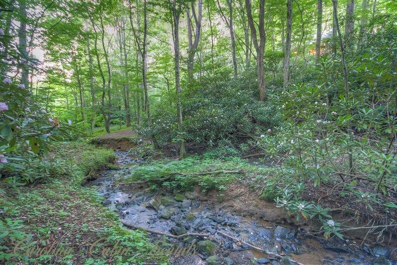 Creek Below Martin's Nest