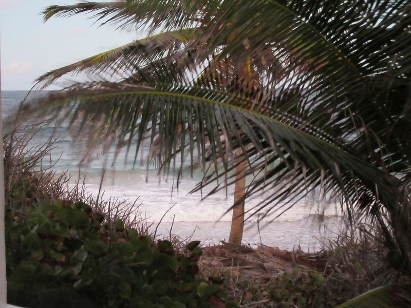 palm tree/beach is within 90 ft. of the veranda