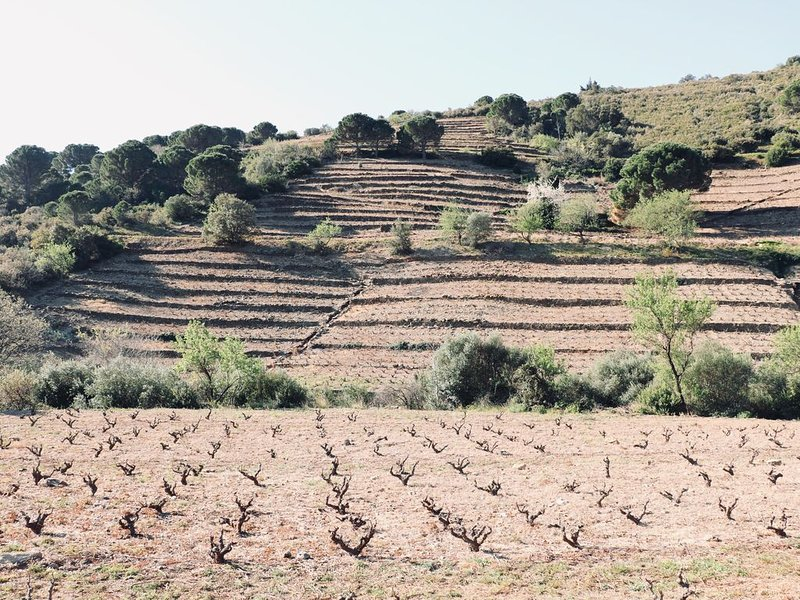 The vineyards around the village
