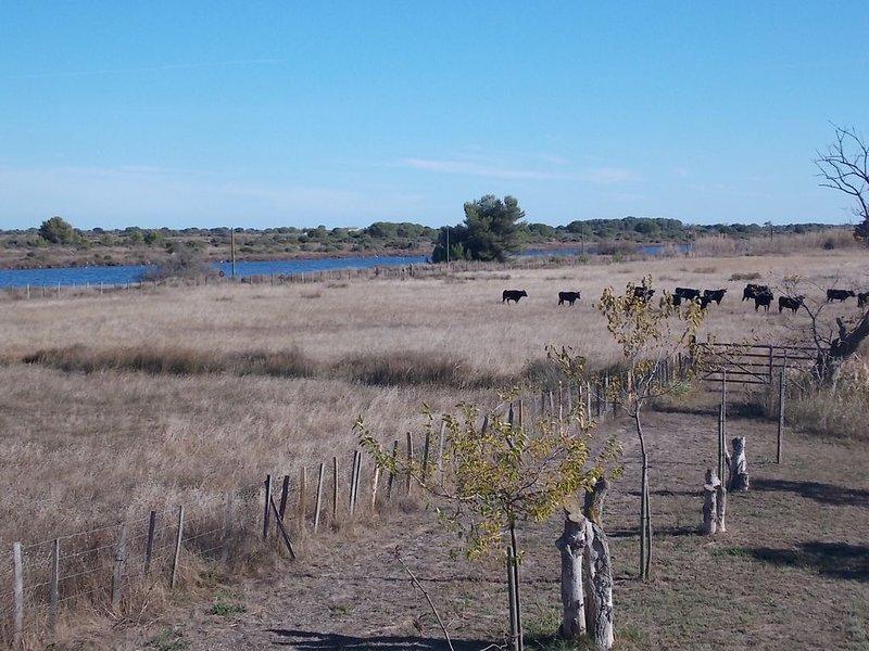 Spacieux duplex dans mas, en zone naturelle protégée proche des plages, alquiler vacacional en Le Grau-du-Roi