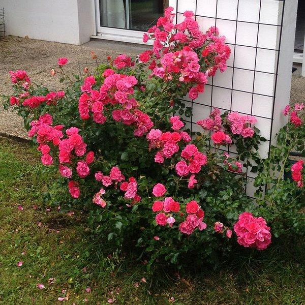 Rez de jardin dans petite résidence basque, holiday rental in Boucau