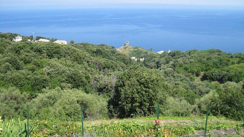 Location Saisonniere d'appartement à Pino Cap Corse  2/3 personnes, holiday rental in Ogliastro