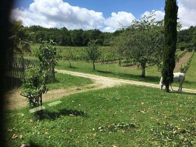 Gîte privé  à louer dans un domaine viticole, holiday rental in Singleyrac