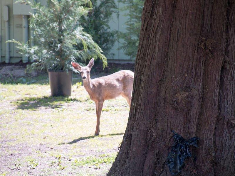 Or deer sometimes comes to visit