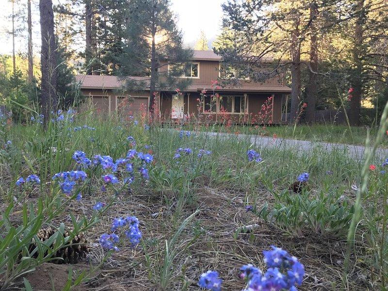 Un acre paisible de Tahoe entouré de services forestiers et de terres du comté.