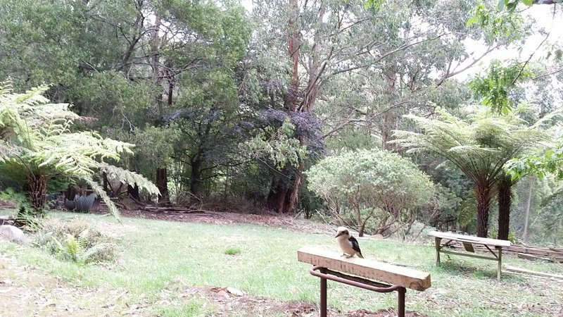 Birdsong Retreat, Olinda - Tranquil & Convenient, vacation rental in Kalorama